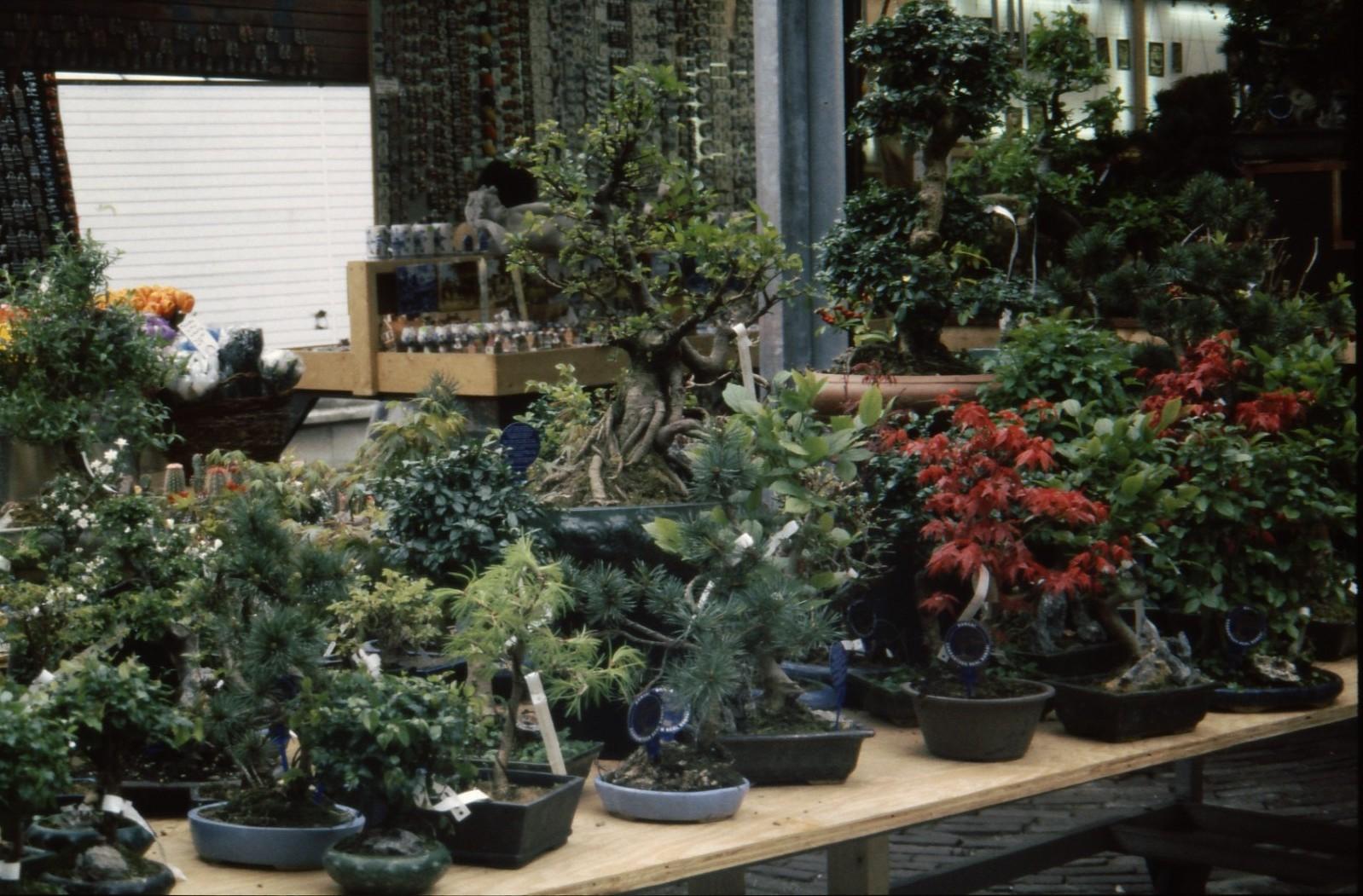 シンゲル花市場#3