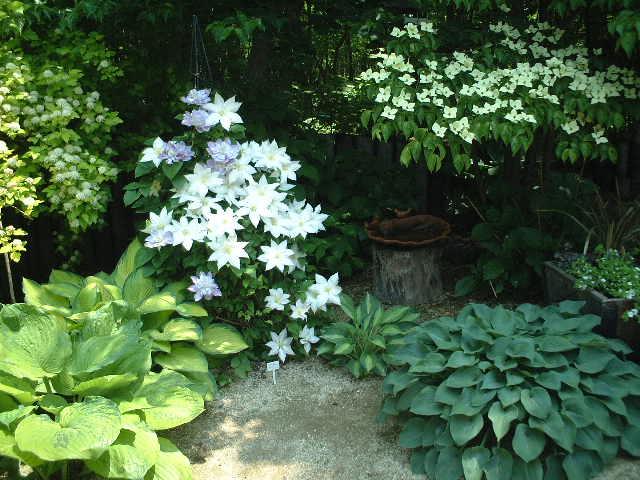 Nさんの庭