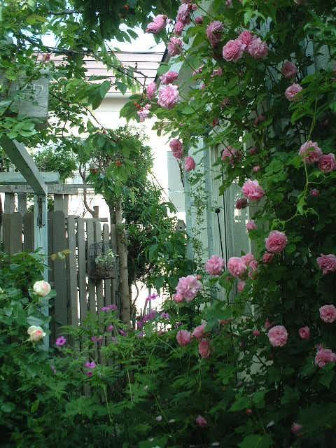 Tさんの庭08_06