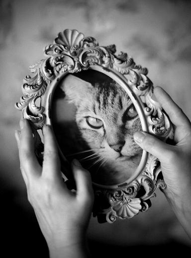 鏡の中のネコ