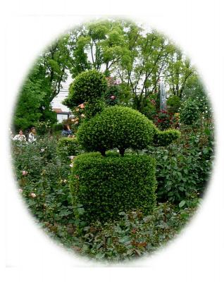 ひらかたパークのローズガーデン=シザー・ハンズの庭?