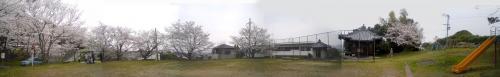 地蔵公園の桜2009-1