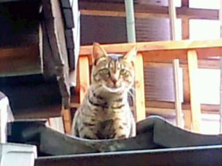 12577411875 スタジオに猫が来た。
