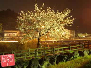 20090405034320182s 桜撮ったど~