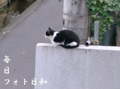 CIMG0742 近所の野良猫
