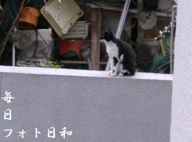 CIMG0743 近所の野良猫