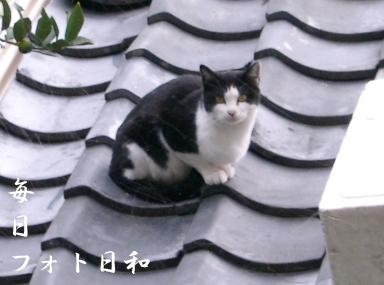 CIMG0745 近所の野良猫