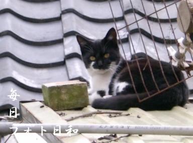 CIMG0746 近所の野良猫