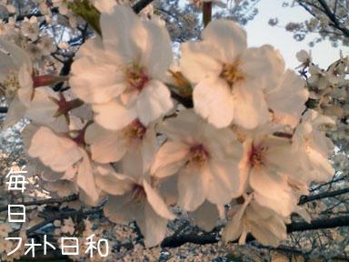 D1000151 お花見日和ですね。