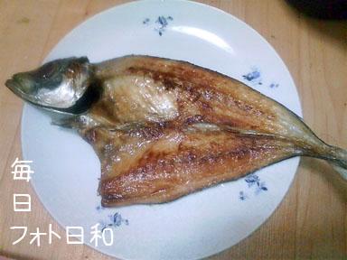 D1006292 魚大好きです。