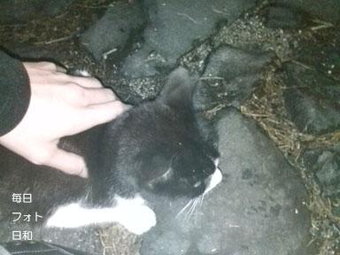 D1006319 野良猫