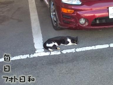 F1000156 野良猫