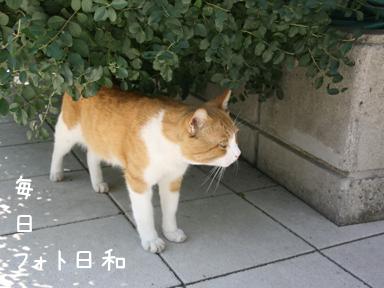 チャペルの野良猫