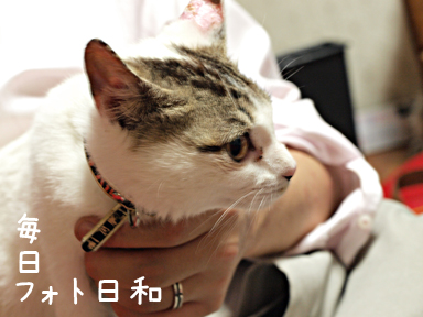 P5240891 友人宅の猫