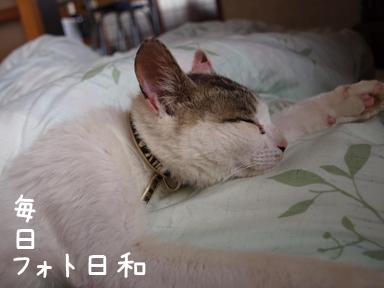 P5240911 友人宅の猫