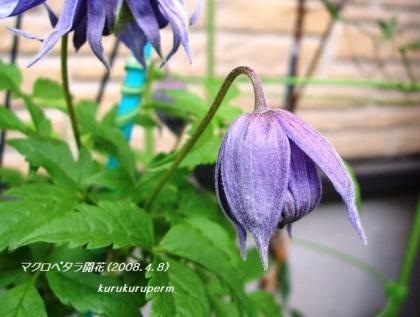 マクロ開花2