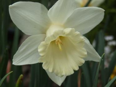 トランテット咲き・サイレントバレイ1