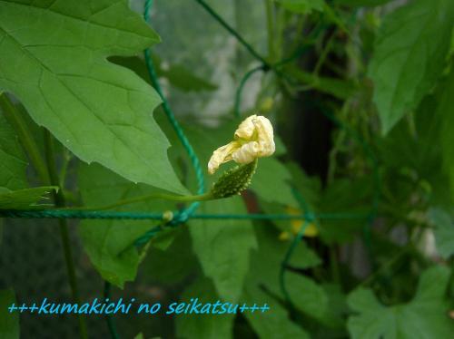 SANY0225kumakichi_convert_20080708002053.jpg