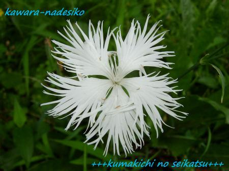 SANY0262kumakichi_convert_20080711232639.jpg