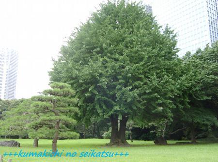 SANY0284kumakichi_convert_20080712000031.jpg