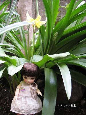 黄色いカタクリの花とちよちゃん
