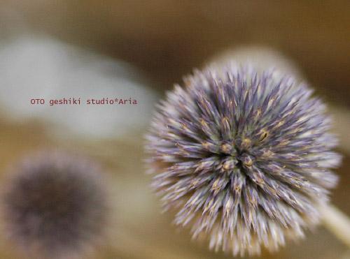 dry-flower1.jpg
