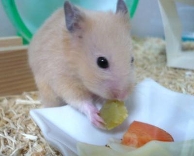 日記10・10ハム仔芋食2