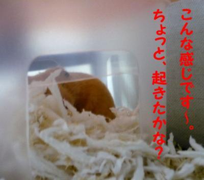 日記11・10冬支度6