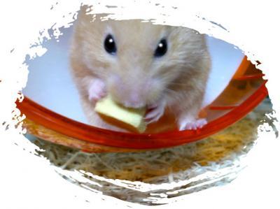 日記3・4高野豆腐食す2