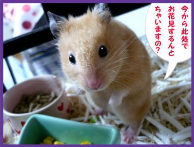 日記3・16早咲き桜4