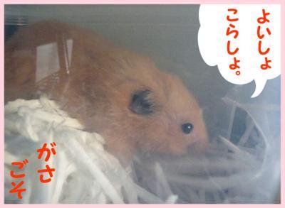 日記5・7ガサゴソ1