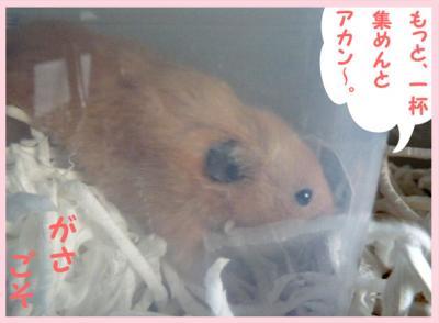 日記5・7ガサゴソ2