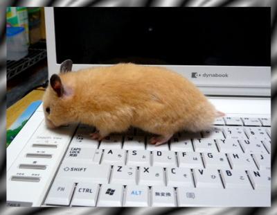 日記6・1パソコン1
