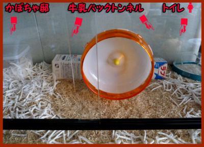 日記6・29牛乳パック1