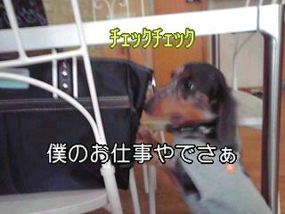 暖くんチェキ☆