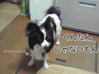 猛犬疑惑。