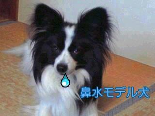 鼻水モデル犬