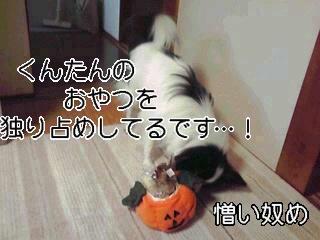 憎いかぼちゃ。