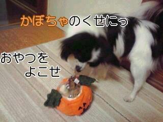 かぼちゃのくせに。