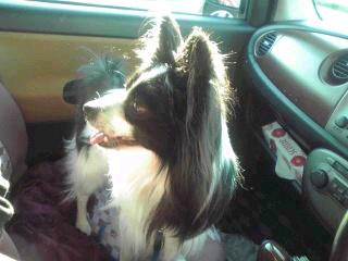 クン in car