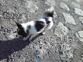 毛深い犬。
