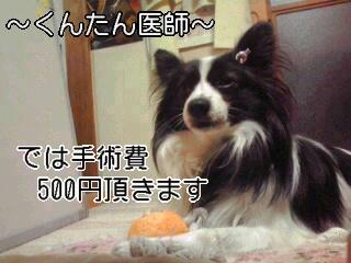 手術費500円。