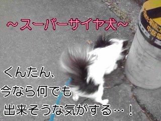 スーパーサイヤ犬。