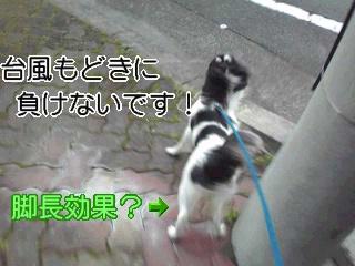台風もどき。