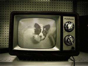 Tv・狙convert_20090306160344