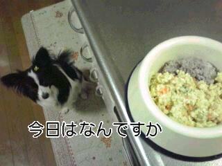 今日のご飯は。