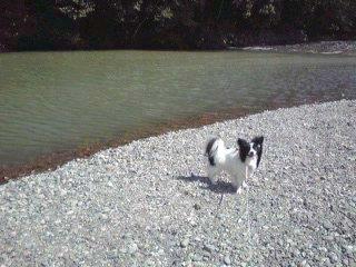 河原のクンちゃん。