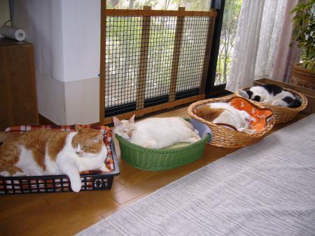 cats4_convert_20090622014157.jpg