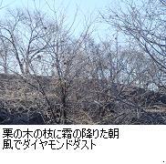栗の木に霜