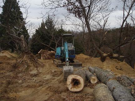ポプラの巨木集積
